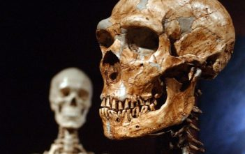 neanderthal and modern human