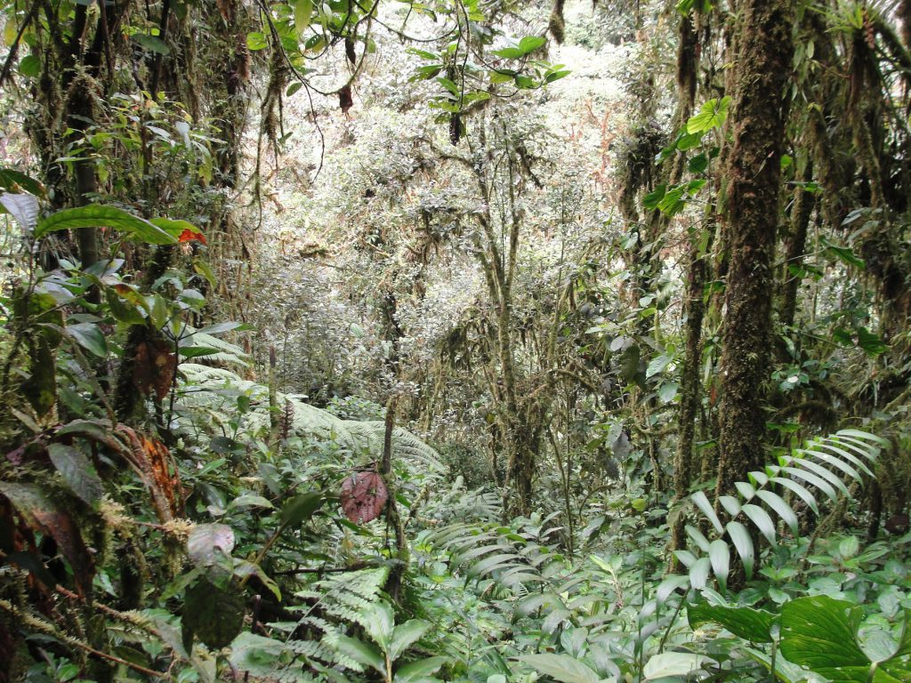ecuador rain forst jungle plants