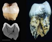 New Dating of the 19th Century Lida Ajer Cave Fossil Discoveries Places Modern Humans in Southeast Asia Perhaps 73,000 Years ago