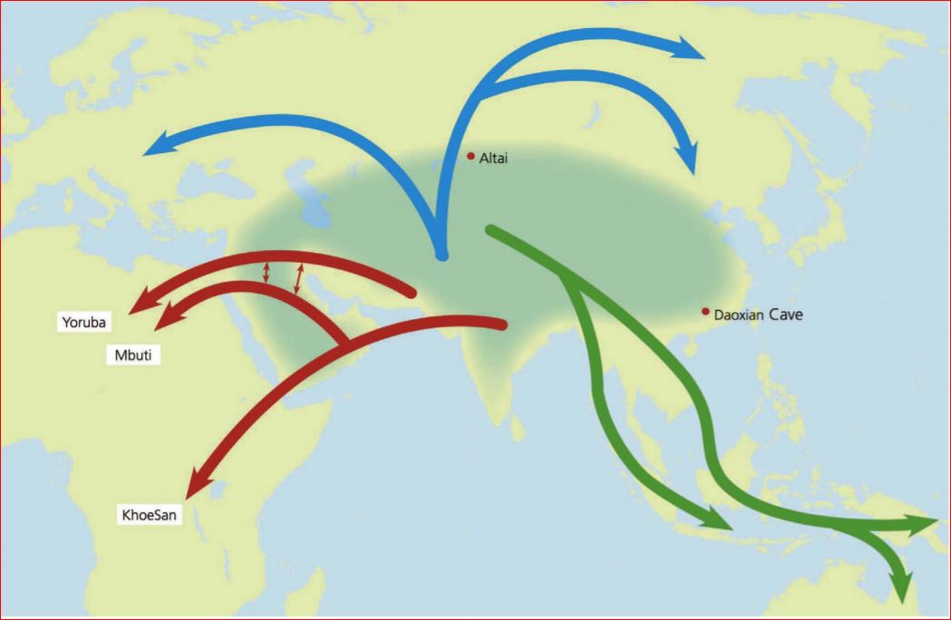 The Out Of Europe Asia Into Africa Theory Of Human Origins New