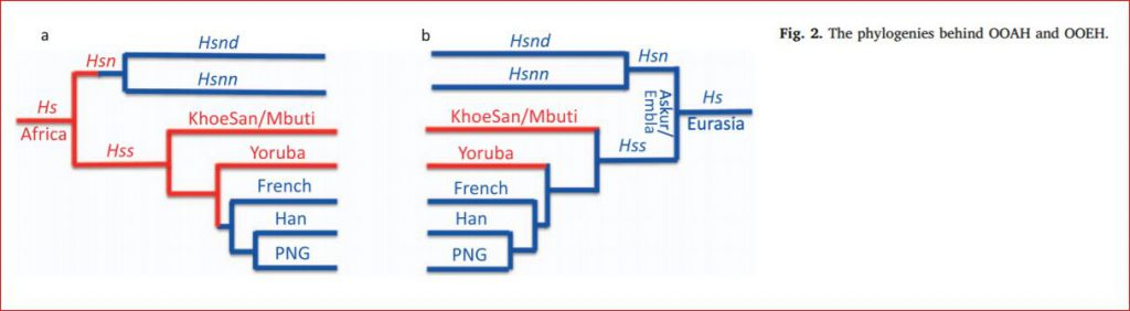 phylogenies of OOAH OOEH